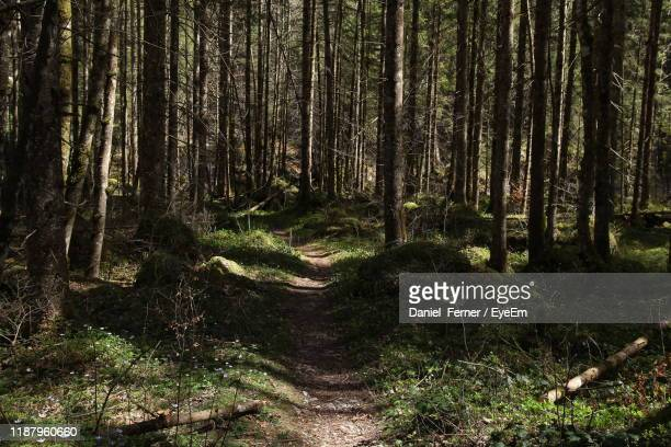 trees growing in forest - berchtesgaden stock pictures, royalty-free photos & images
