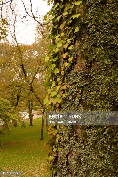 trees growing in forest - nigel owen stock pictures, royalty-free photos & images