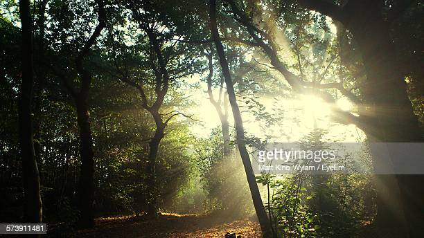 trees growing in forest - berkshire england stock pictures, royalty-free photos & images