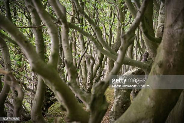 trees growing in forest - lüneburg stock pictures, royalty-free photos & images