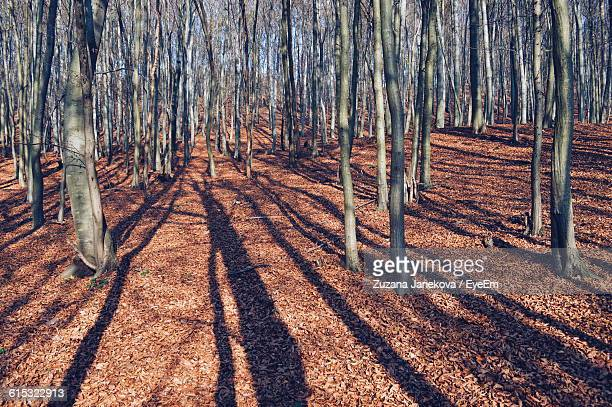 trees growing in forest - zuzana janekova stock pictures, royalty-free photos & images
