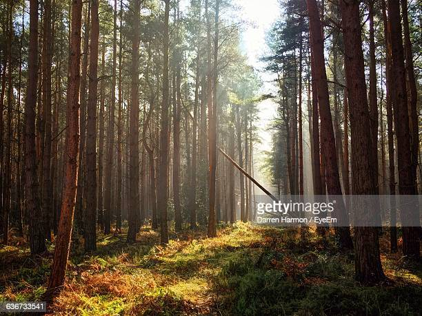 trees growing in forest - tyne and wear stock pictures, royalty-free photos & images