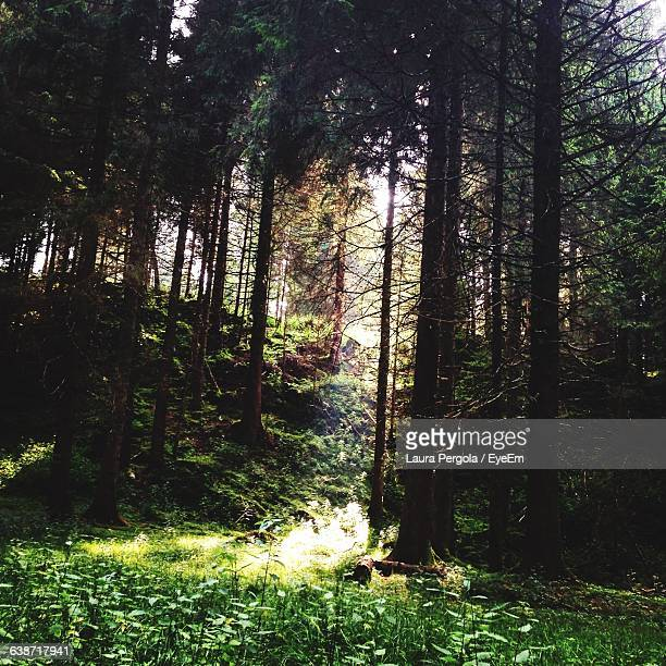 trees growing in forest - laura woods stock pictures, royalty-free photos & images