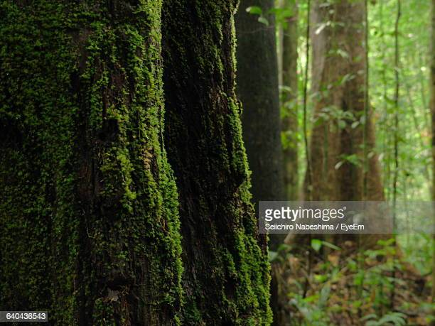 trees growing in forest - flying buttress stock photos and pictures