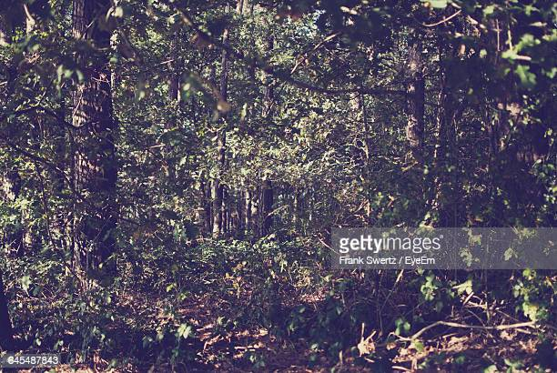 trees growing in forest - frank swertz stock pictures, royalty-free photos & images