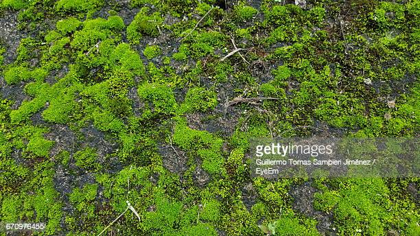 trees growing in forest - moss stock pictures, royalty-free photos & images