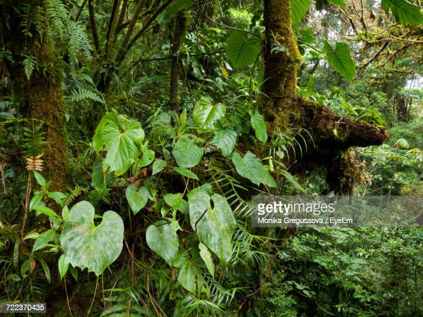 trees growing in forest - monika gregussova stock pictures, royalty-free photos & images