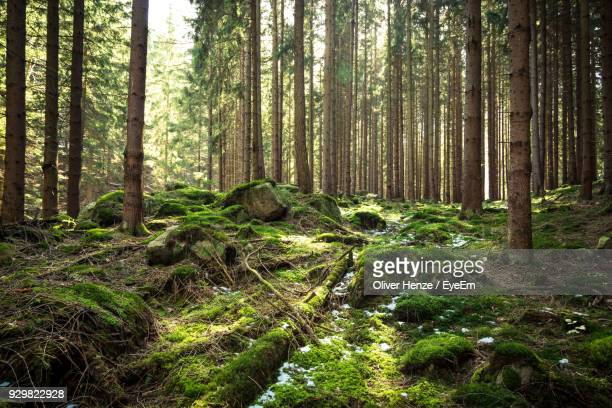 trees growing in forest - naturwald stock-fotos und bilder