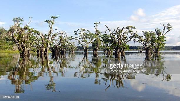 Trees growing in lagoon
