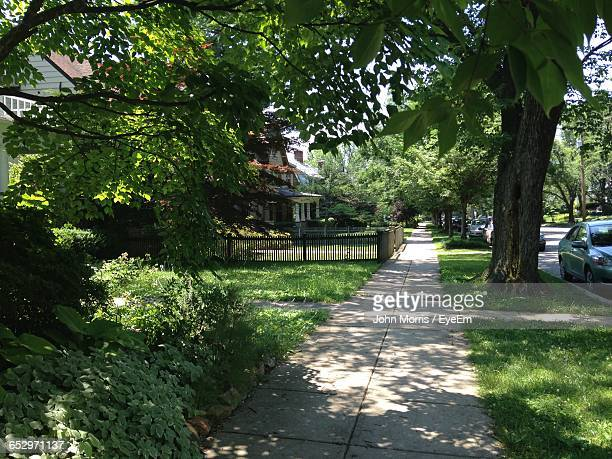 trees growing in park - chevy chase maryland stock pictures, royalty-free photos & images