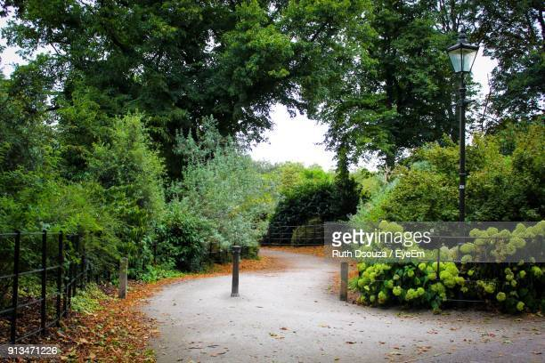 trees growing in park - battersea park stock photos and pictures