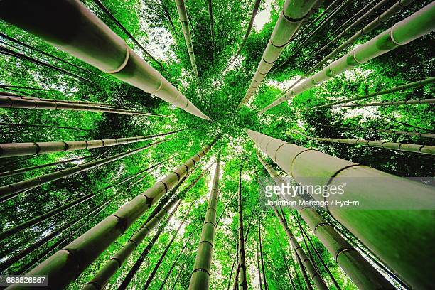 trees growing in the dark - bamboo forest stock photos and pictures