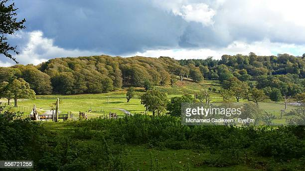 trees growing on field against cloudy sky - longleat house stock pictures, royalty-free photos & images