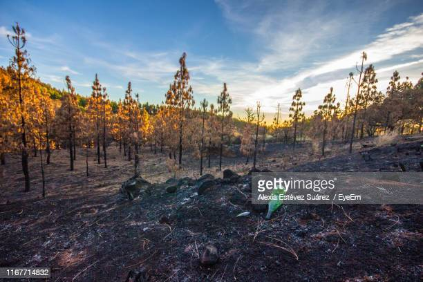 trees growing on field against sky - tejeda stock pictures, royalty-free photos & images
