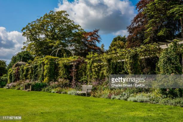 trees growing on field against sky - bognor regis stock pictures, royalty-free photos & images