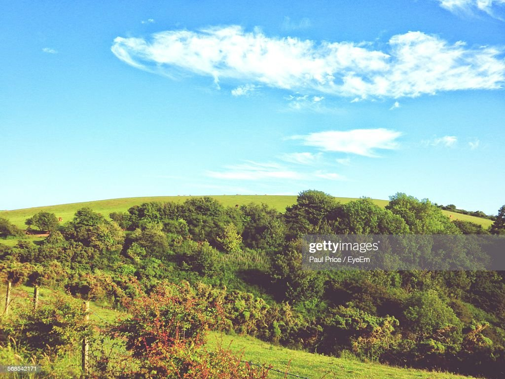 Trees Growing On Field Against Sky : Stock Photo