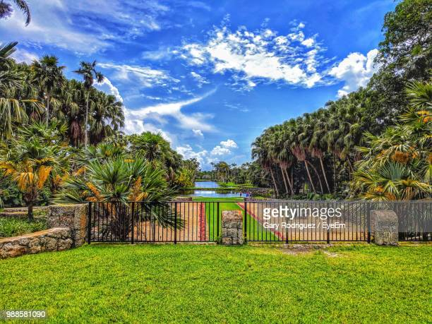 trees growing on field against sky - coral gables stock pictures, royalty-free photos & images