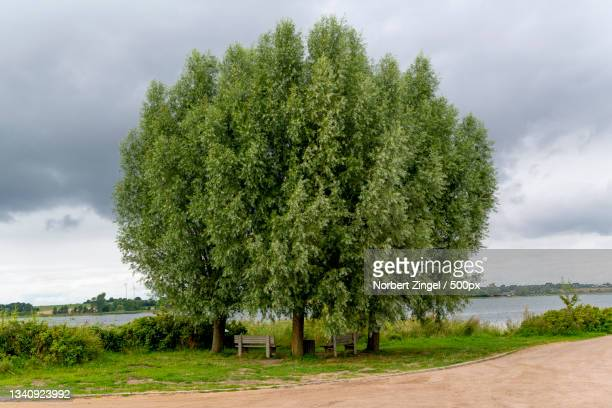 trees growing on field against sky,sieseby,thumby,germany - norbert zingel stock-fotos und bilder