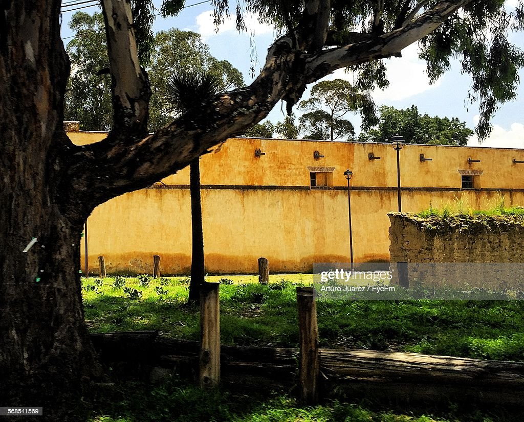 Trees Growing On Field Against Yellow Retaining Wall : Stock Photo