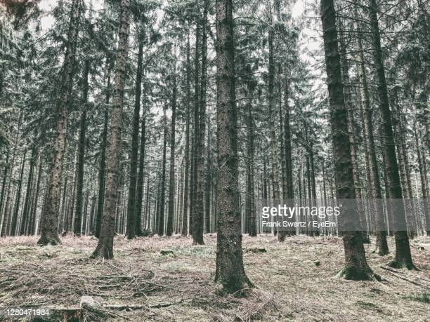 trees growing on field in forest - frank swertz stock pictures, royalty-free photos & images