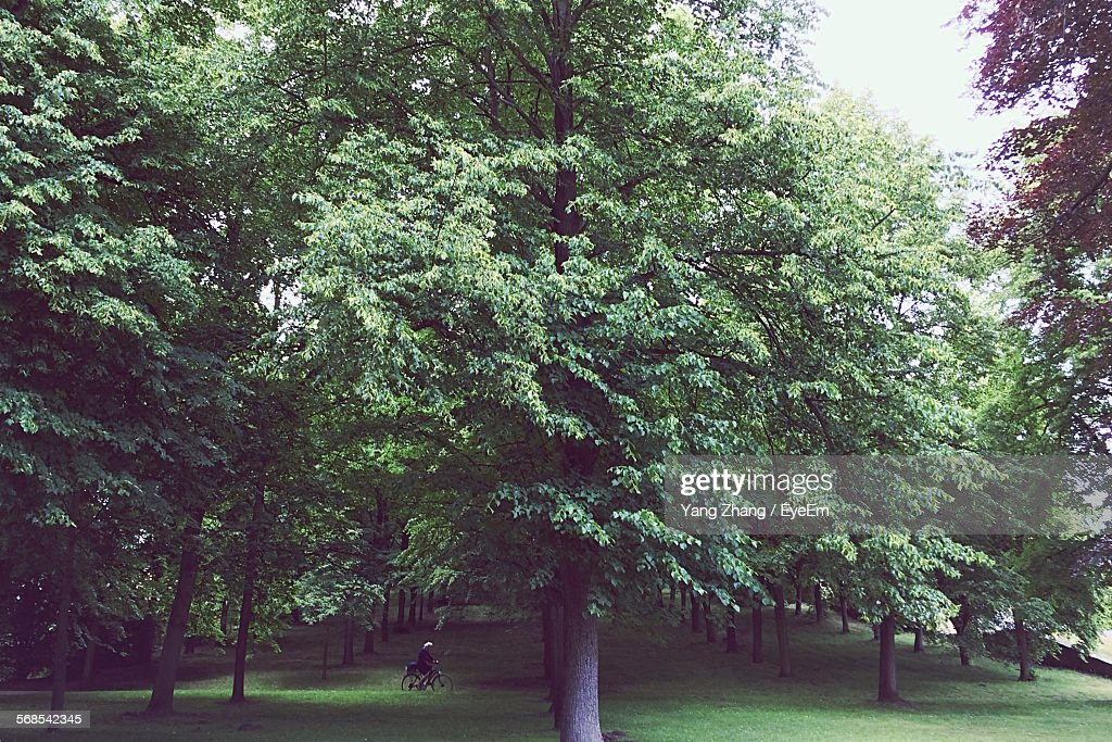 Trees Growing On Field In Park : Stock Photo