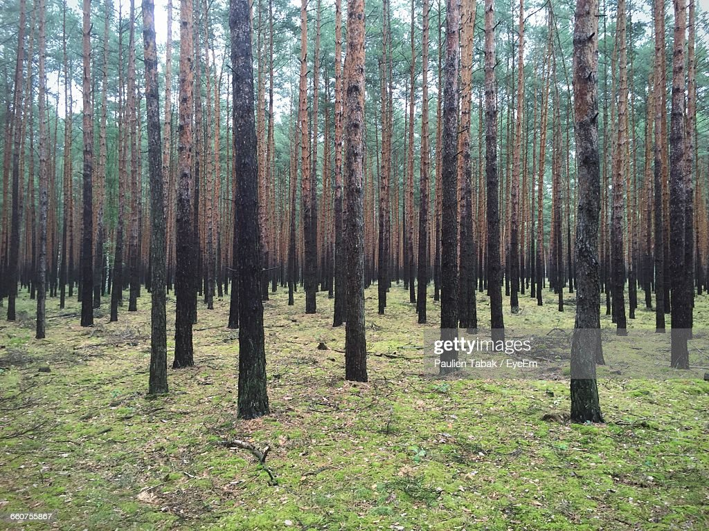 Trees Growing On Field : Stock Photo