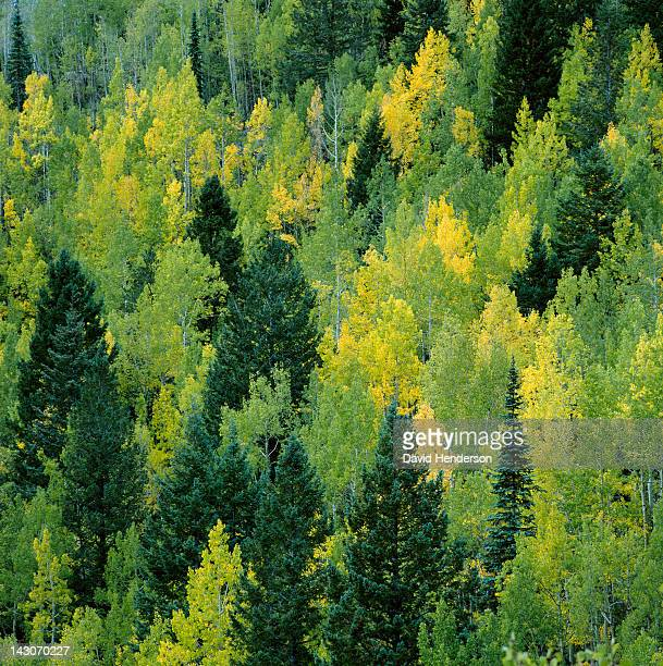 Trees growing on forested hillside