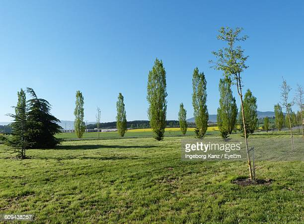 Trees Growing On Grassy Field Against Clear Blue Sky