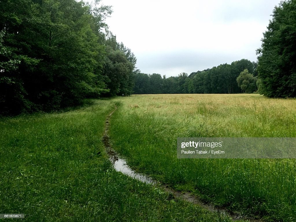 Trees Growing On Grassy Field Against Sky : Stockfoto
