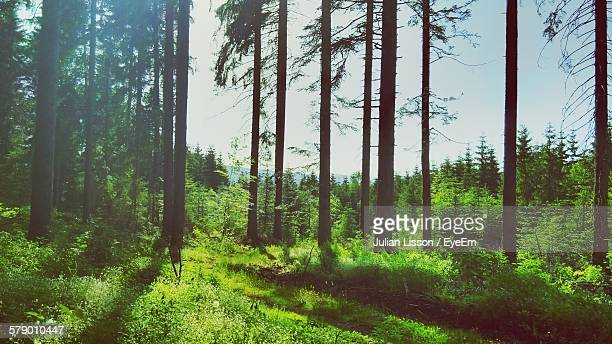 trees growing on grassy field at forest - tela grande - fotografias e filmes do acervo