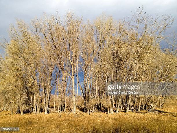 trees growing on grassy field during sunny day - provo foto e immagini stock