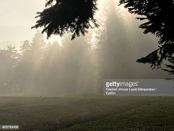 Trees Growing On Grassy Field In Foggy Weather