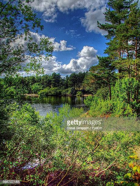 trees growing on lakeshore at hillsborough park - hillsborough sheffield stock pictures, royalty-free photos & images