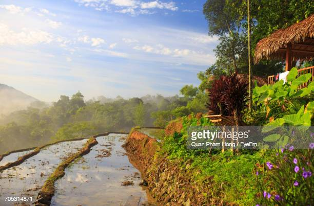 trees growing on landscape - hong quan stock pictures, royalty-free photos & images