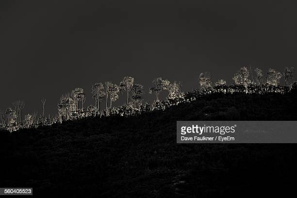 Trees Growing On Mountain Against Sky At Night