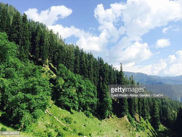 Trees Growing On Mountain Against Sky