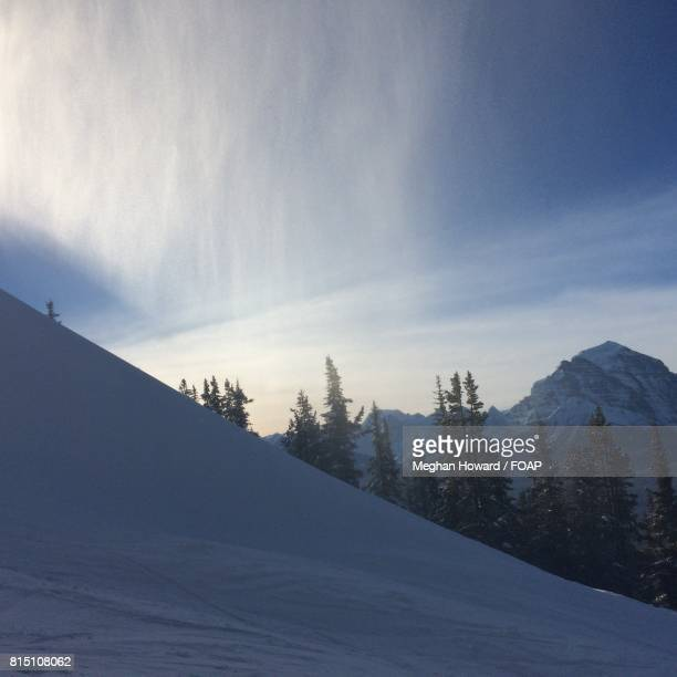 trees growing on snowy mountain - meghan stock photos and pictures