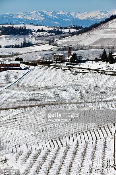 Trees growing on snowy rural hillside