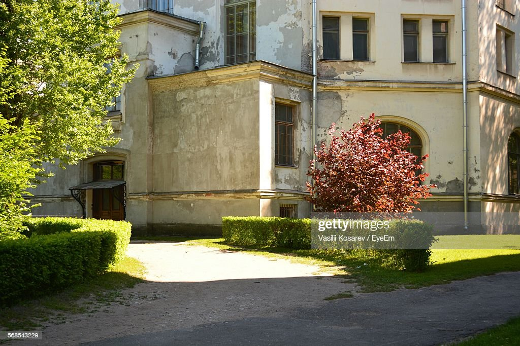 Trees Growing Outside Building : Stock Photo