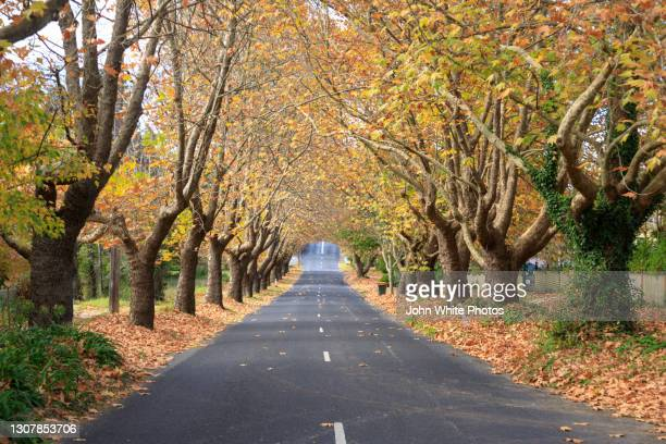 trees growing over the road at wentworth falls. new south wales. australia. - falls road stock pictures, royalty-free photos & images
