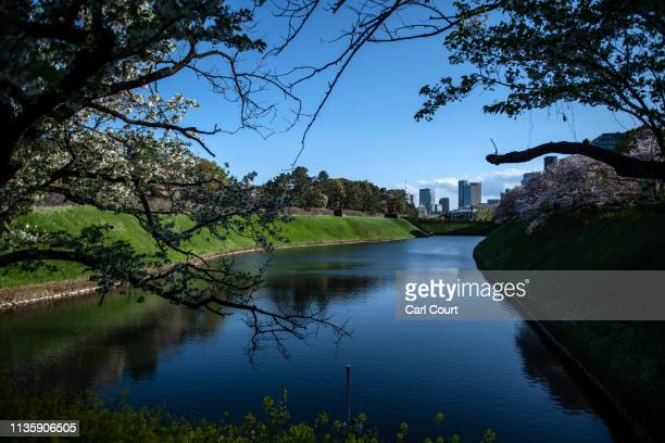 Trees hang over Chidorigafuchi Moat one of 15 moats surrounding the Imperial Palace on April 9 2019 in Tokyo Japan Tokyo's Imperial Palace was built...