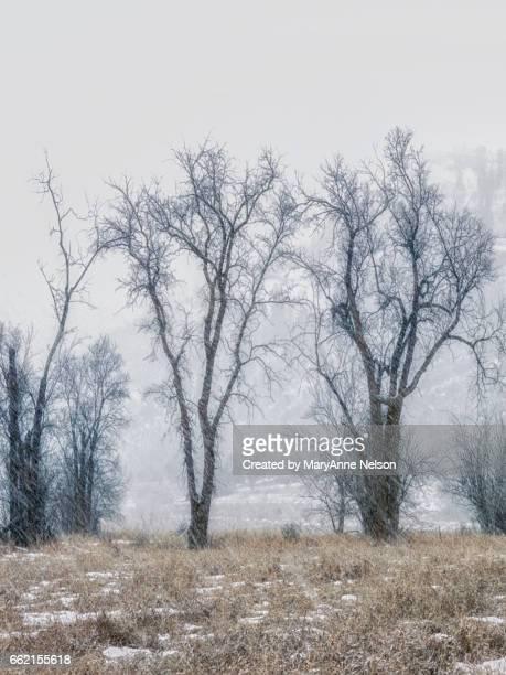trees in a blizzard - mary moody fotografías e imágenes de stock
