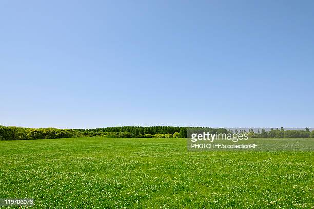 Trees in a field, Tokyo Prefecture, Honshu, Japan