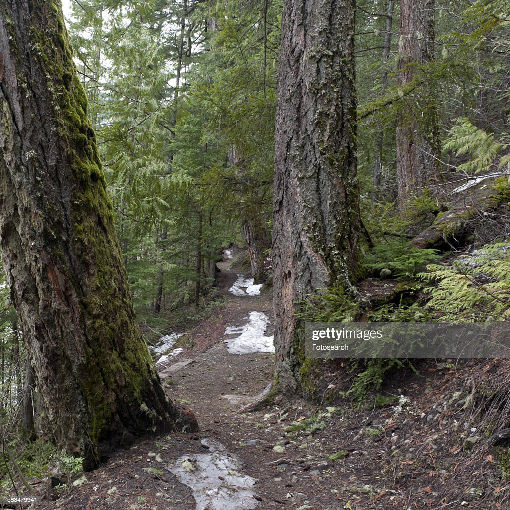 Trees in a forest : Stock Photo