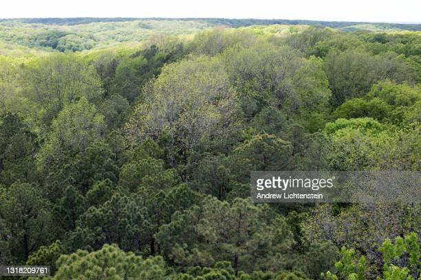 Trees in a forest stretch for miles in a protected national forest, May 14 in Hoosier National Forest, Indiana.