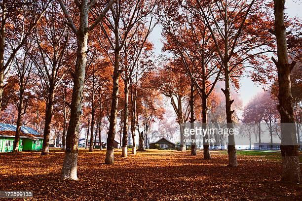 Trees in a garden, Naseem Bagh, Srinagar, Jammu And Kashmir, India