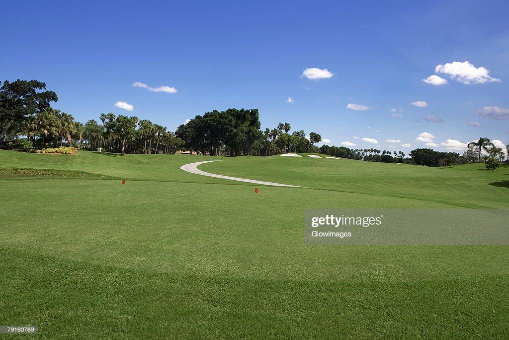Trees in a golf course : Foto de stock