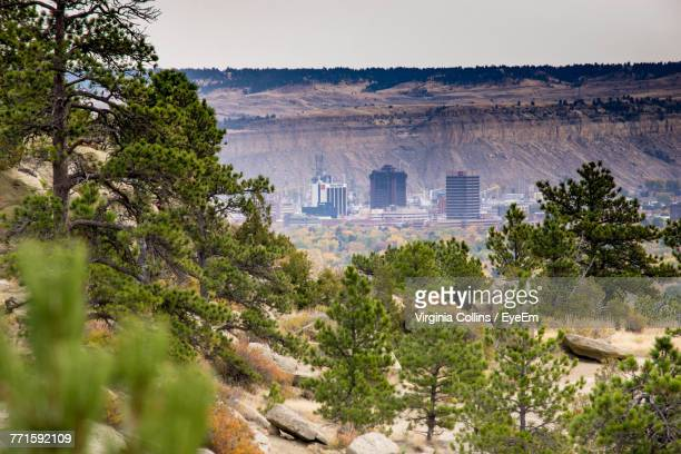 trees in a landscape - billings montana stock pictures, royalty-free photos & images
