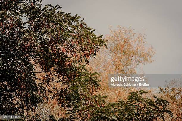 trees in a park - albrecht schlotter stock pictures, royalty-free photos & images