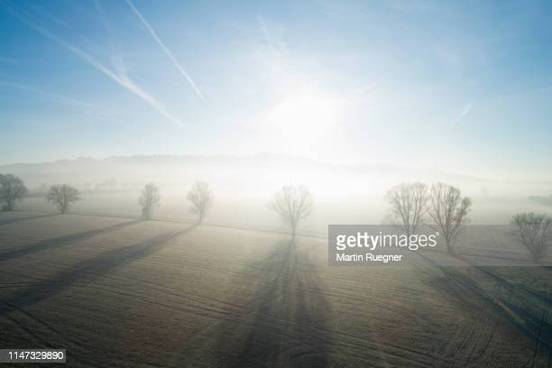 trees in a row with fog and bright sun and long shadows at backlit aerial view, winter. franconia, bavaria, germany. - bavaria stock pictures, royalty-free photos & images